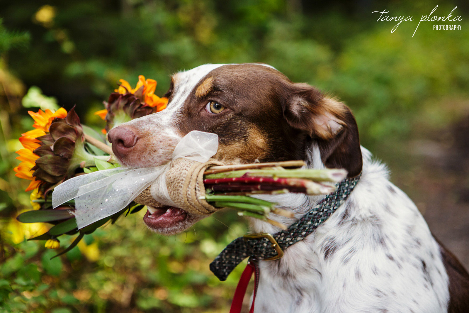 pet dog holding wedding bouquet in mouth
